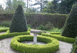 Buxus hedging in the walled garden